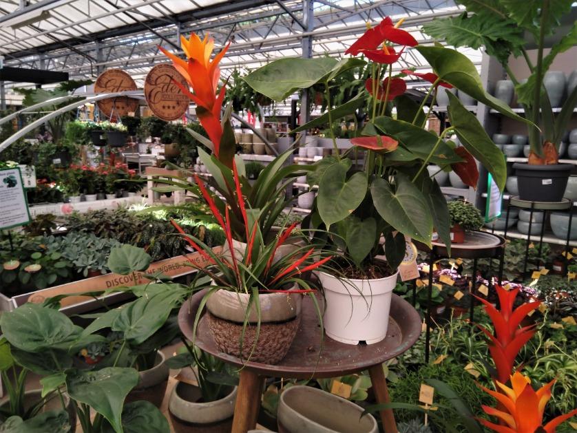 Bloeiende planten kopen | Tuincentrum Rebel