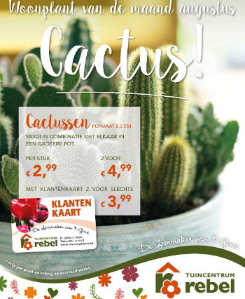 Cactus kopen | Tuincentrum Rebel