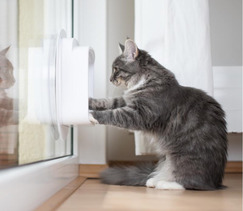 Kattenluikjes kopen | Tuincentrum Rebel